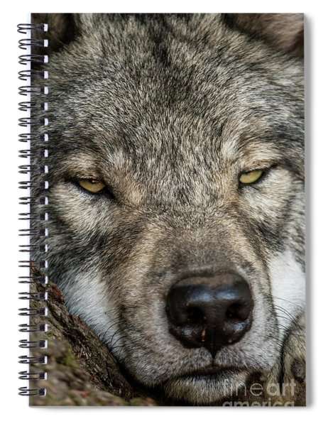 Timber Wolf Picture - Tw288 Spiral Notebook