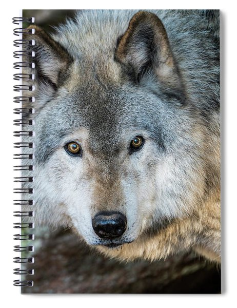 Timber Wolf Picture - Tw291 Spiral Notebook