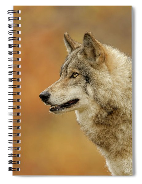 Timber Wolf Picture - Tw293 Spiral Notebook