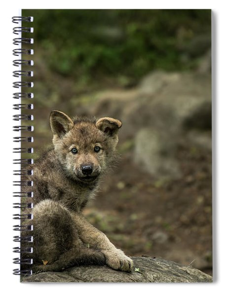 Timber Wolf Picture - Tw335 Spiral Notebook