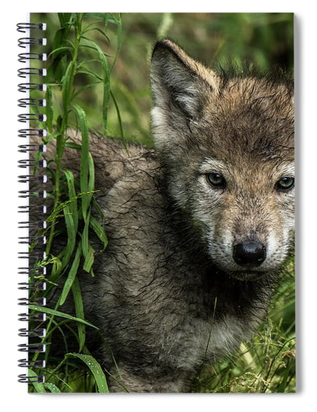 Timber Wolf Picture - Tw336 Spiral Notebook