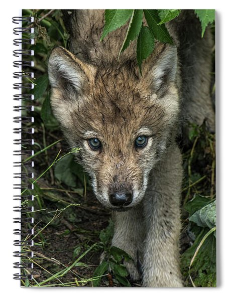 Timber Wolf Picture - Tw337 Spiral Notebook