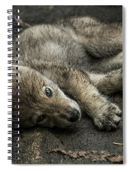 Timber Wolf Picture - Tw338 Spiral Notebook