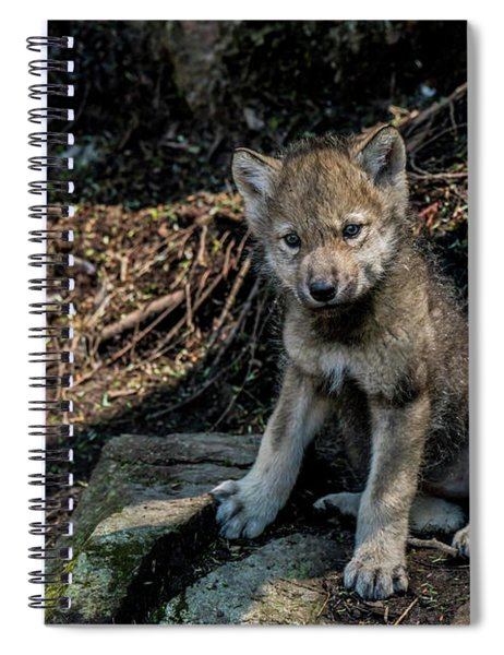 Timber Wolf Picture - Tw339 Spiral Notebook