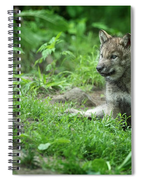 Timber Wolf Picture - Tw341 Spiral Notebook