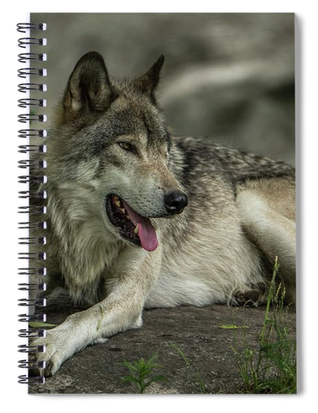 Timber Wolf Picture - Tw414 Spiral Notebook