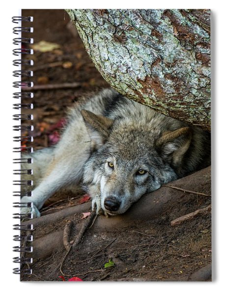 Timber Wolf Picture - Tw415 Spiral Notebook