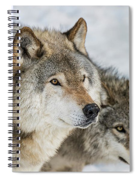 Timber Wolf Picture - Tw416 Spiral Notebook