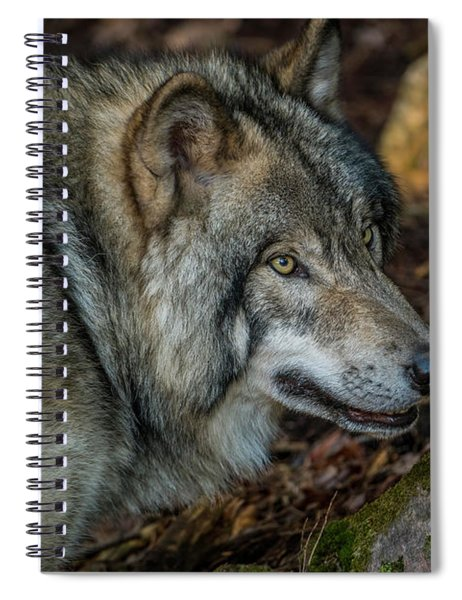 Timber Wolf Picture - Tw417 Spiral Notebook