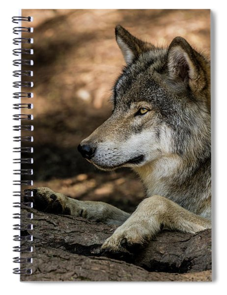 Timber Wolf Picture - Tw418 Spiral Notebook