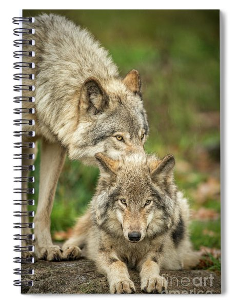 Timber Wolf Picture - Tw419 Spiral Notebook