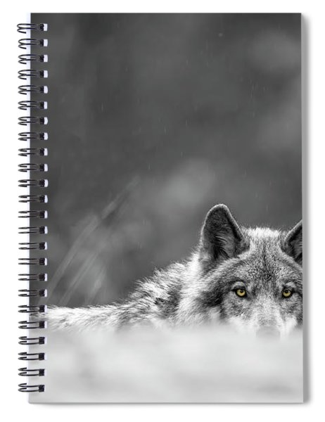 Timber Wolf Picture - Tw420 Spiral Notebook