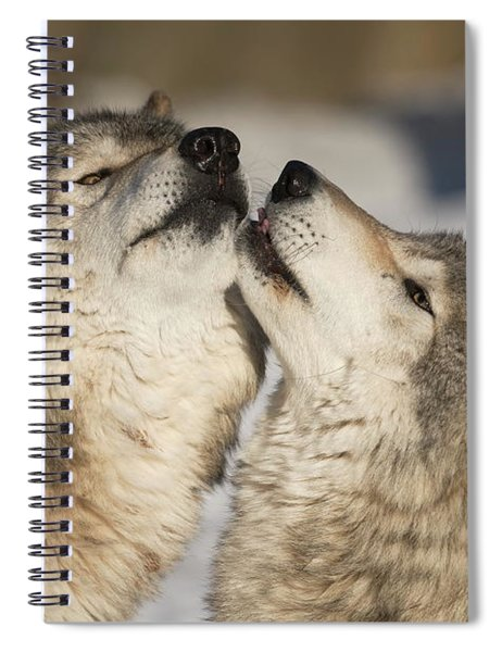 Timber Wolf Picture - Tw66 Spiral Notebook