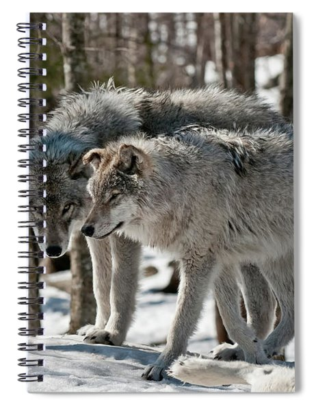 Timber Wolf Picture - Tw67 Spiral Notebook