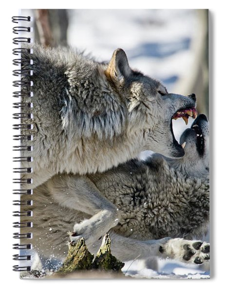 Timber Wolf Picture - Tw68 Spiral Notebook