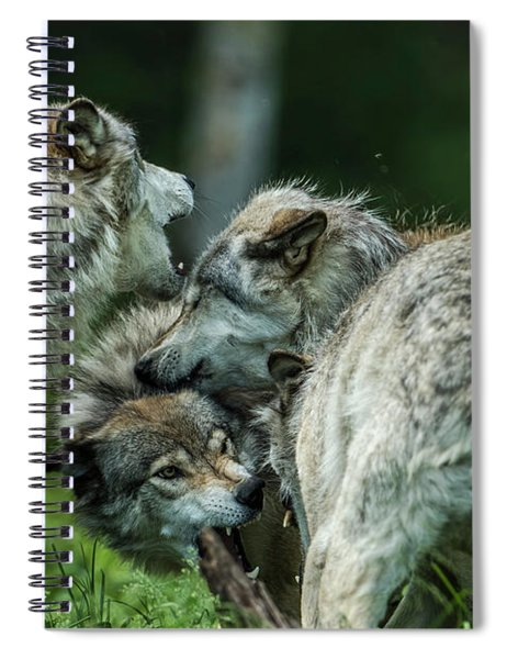 Timber Wolf Picture - Tw70 Spiral Notebook