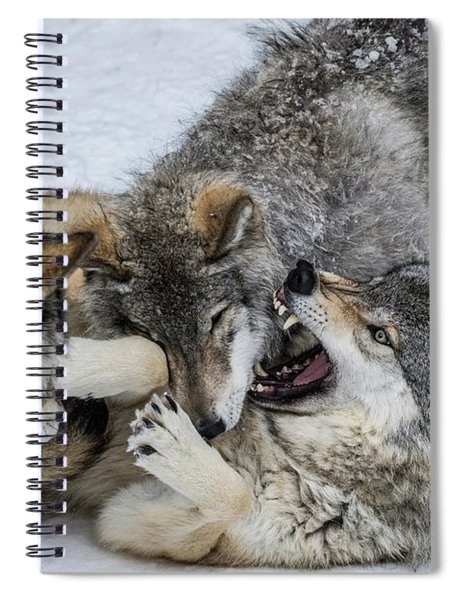 Timber Wolf Picture - Tw71 Spiral Notebook