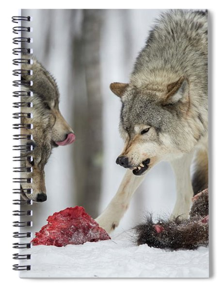 Timber Wolf Picture - Tw72 Spiral Notebook
