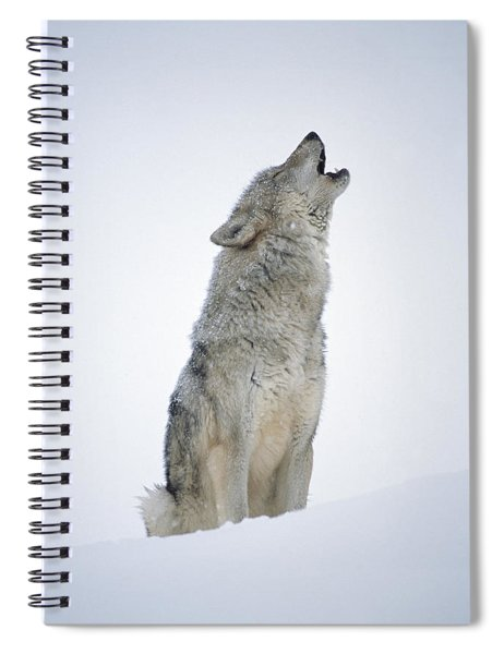 Timber Wolf Portrait Howling In Snow Spiral Notebook