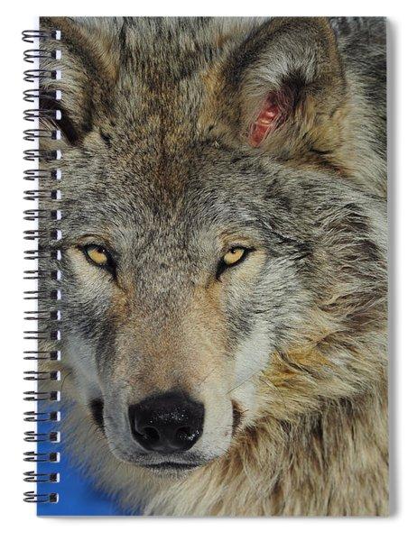 Timber Wolf Portrait Spiral Notebook
