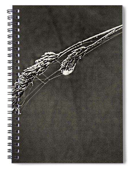 Tiny Web On Bent Grass Spiral Notebook