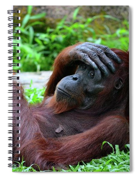 Tired Female Orangutan Ape Rests Against Tree With Hand On Her Head Spiral Notebook