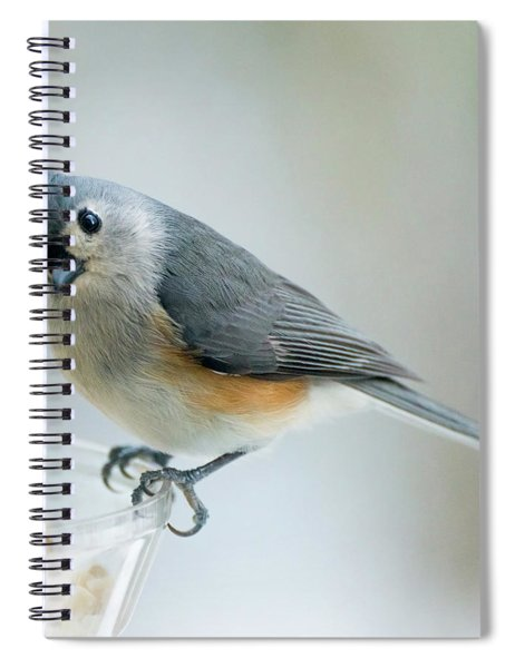 Titmouse With Walnuts Spiral Notebook