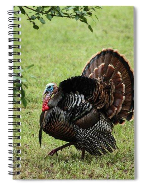 Tom Turkey In Spring Spiral Notebook