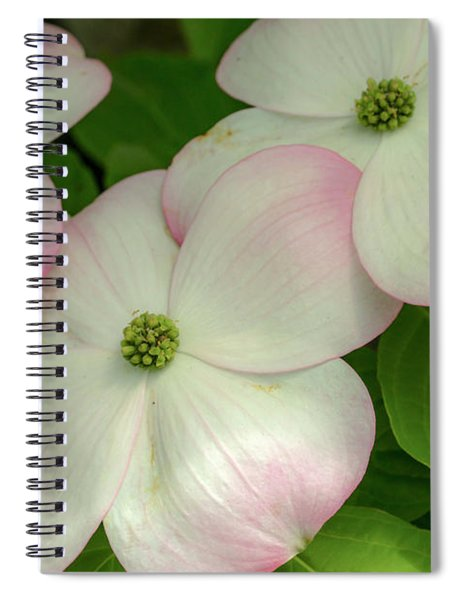 Touch Of Pink2 Spiral Notebook