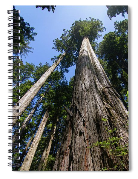 Towering Redwoods Spiral Notebook