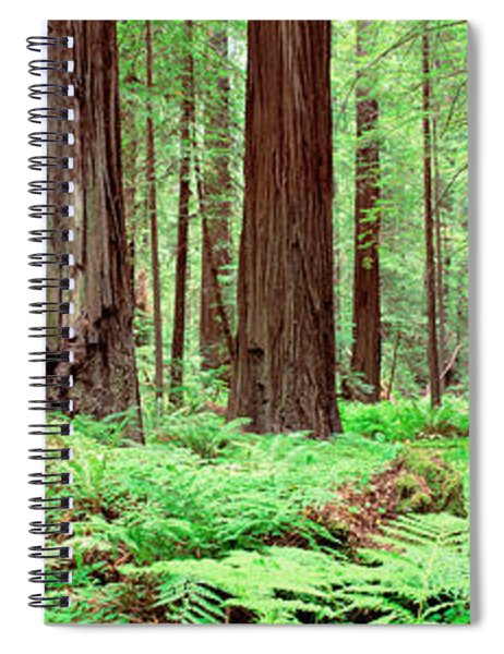 Trail, Avenue Of The Giants, Founders Spiral Notebook