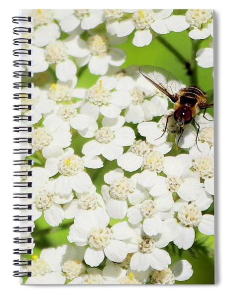 Transverse Flower Fly Spiral Notebook