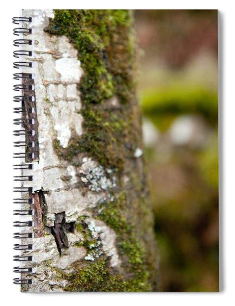 Tree Bark Graffiti - H 04 Spiral Notebook