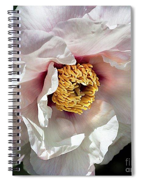 Tree Peony 'mystery' Spiral Notebook