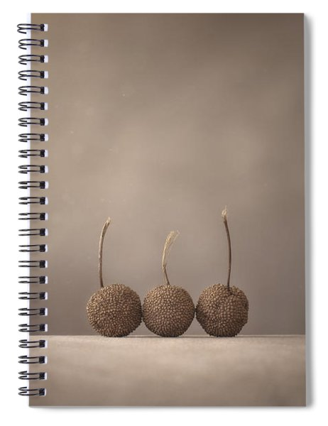 Tree Seed Pods Spiral Notebook