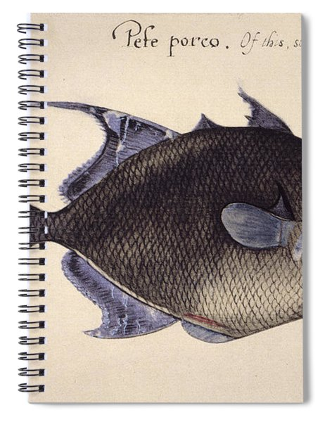 Trigger-fish, 1585 Spiral Notebook