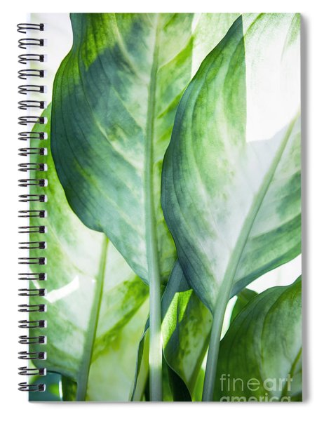Tropic Abstract  Spiral Notebook