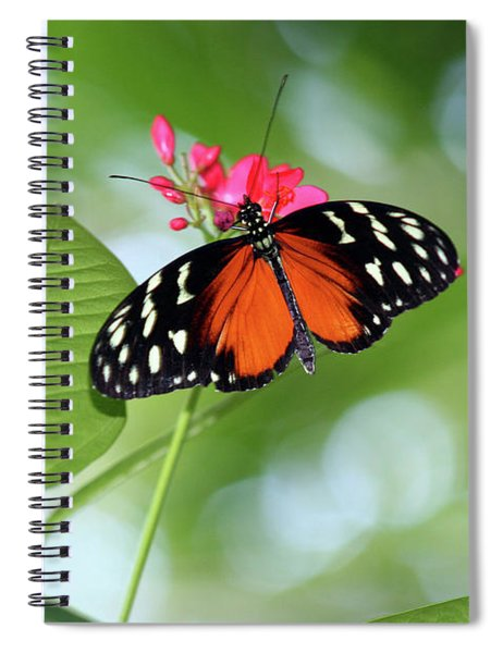 Tropical Hecale Butterfly Spiral Notebook