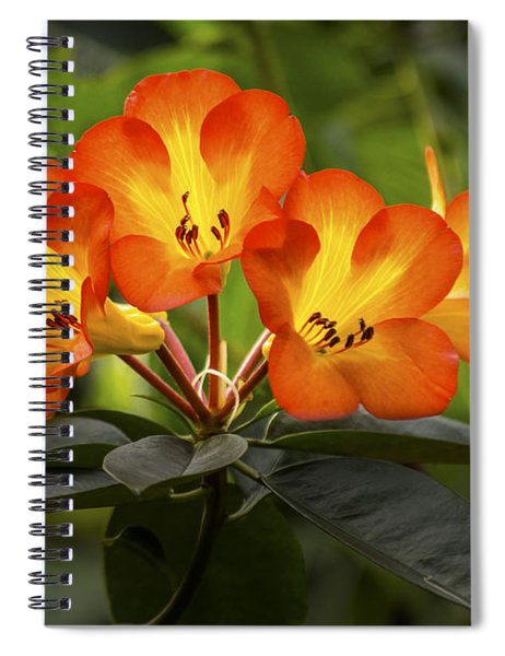 Tropical Rhododendron Spiral Notebook