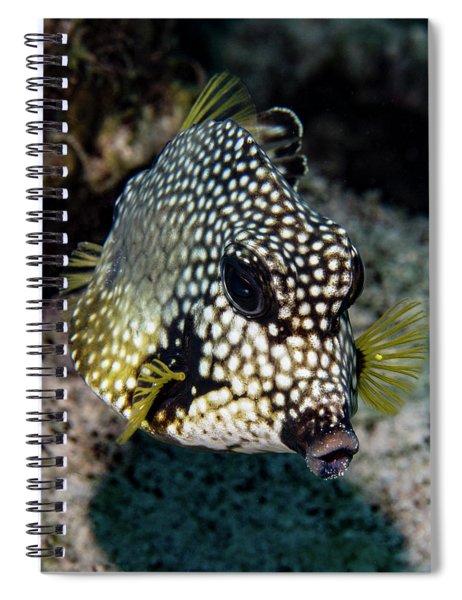 Trunkfish Portrait Spiral Notebook