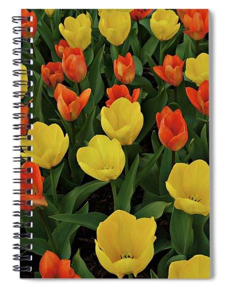 Tulip Chorus Spiral Notebook
