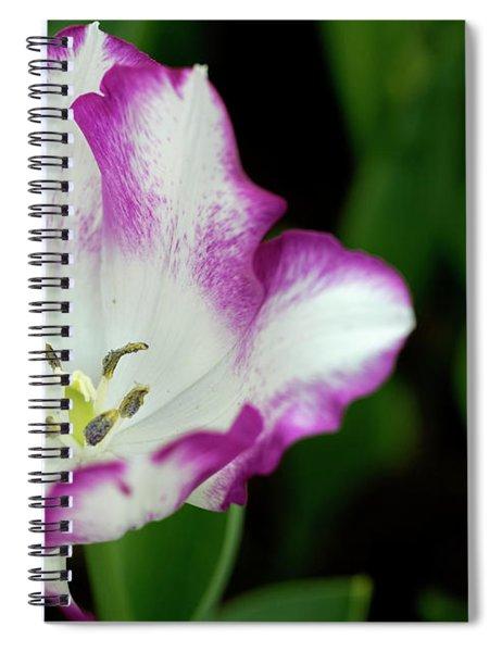 Tulip Flower Spiral Notebook by Pradeep Raja Prints