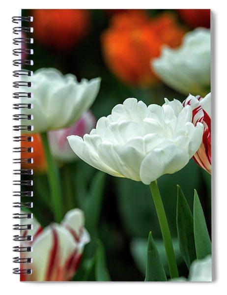 Tulip Flowers Spiral Notebook by Pradeep Raja Prints
