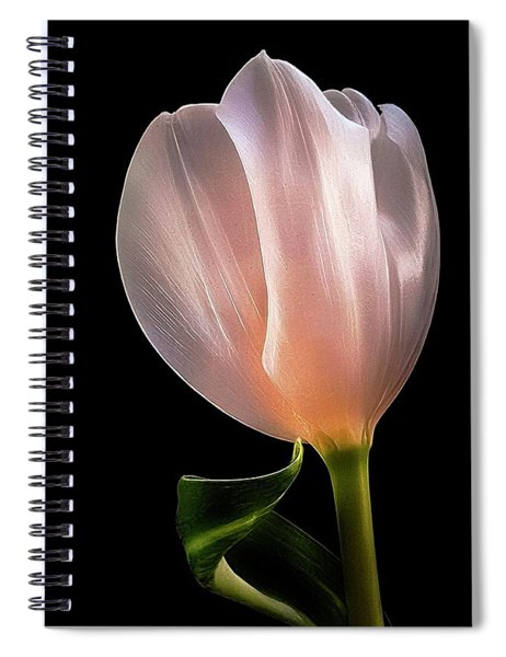 Tulip In Light Spiral Notebook