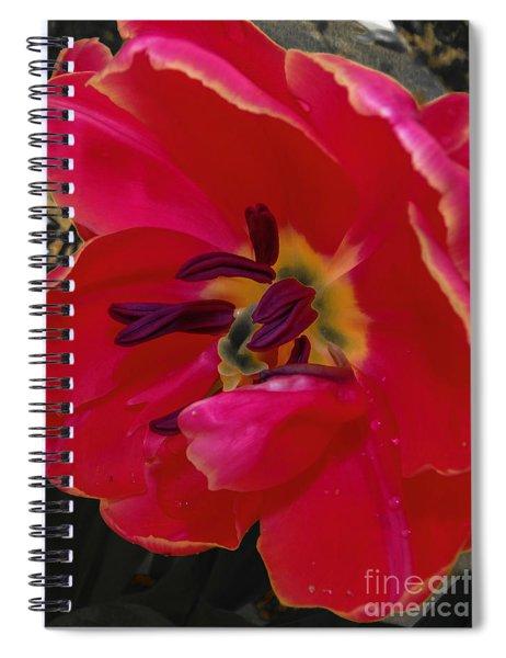Tulip Portrait Spiral Notebook