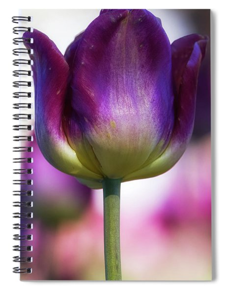 Spiral Notebook featuring the photograph Tulip Time 1 by Heather Kenward