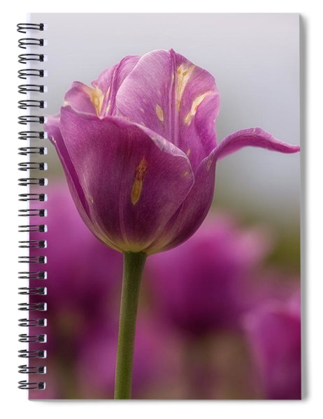 Spiral Notebook featuring the photograph Tulip Time 14 by Heather Kenward