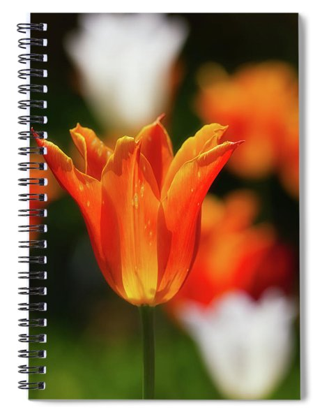 Spiral Notebook featuring the photograph Tulip Time 20 by Heather Kenward