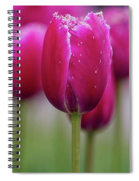 Spiral Notebook featuring the photograph Tulip Time 22 by Heather Kenward