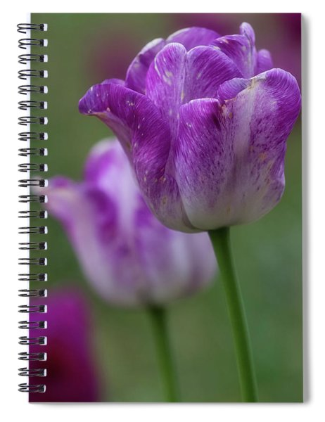 Spiral Notebook featuring the photograph Tulip Time 24 by Heather Kenward